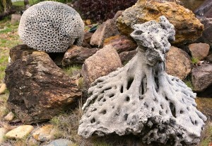 Ancient coral from St Helena Island