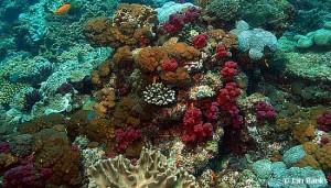 flinders-reef-ian-banks credit