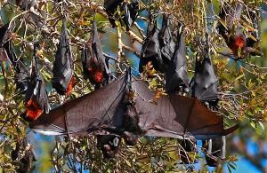 fruits bats