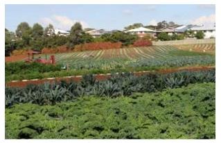 wello-market-garden